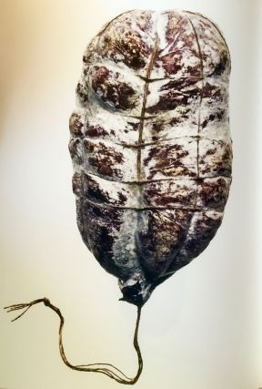 [ART] [FOOD] [PHOTOGRAPHY] Salami; Text by Gerard Oberle